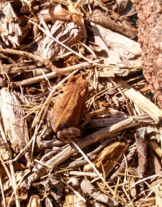 Toad.1.IMG_20150803_093555_396